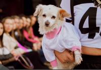 Mercado Pet de Luxo investe cada vez mais em festas especiais para cães e gatos